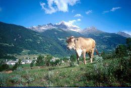Untitled-13Italian-SwissTourcopy